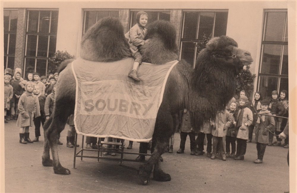Luuk Gruwez op de Soubry-kameel